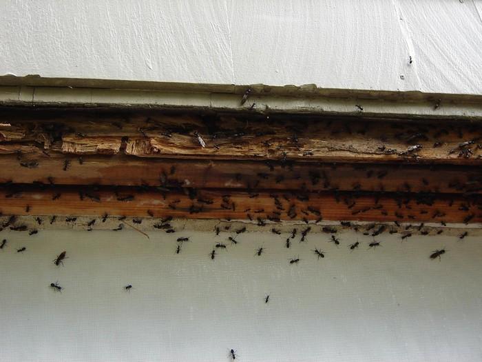 Jak na mravence s firmou Dopareal