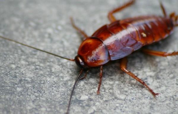 Jak na šváby s firmou Dopareal