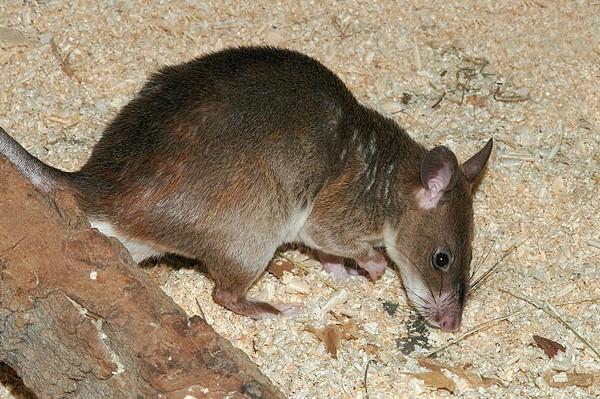 Jak se zbavit krys s firmou Dopareal