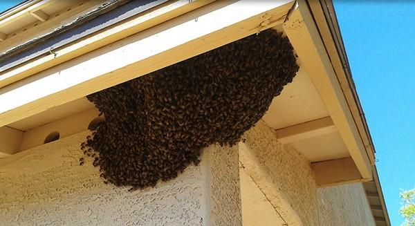 Jak na včely s firmou Dopareal