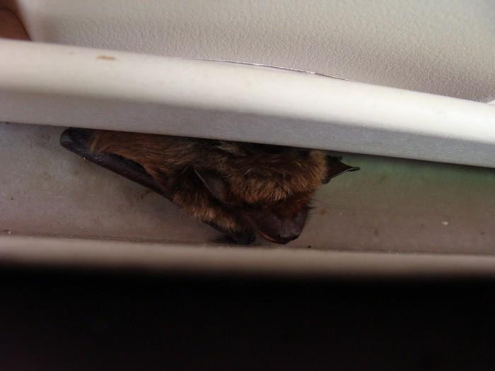 Jak na netopýry s firmou Dopareal