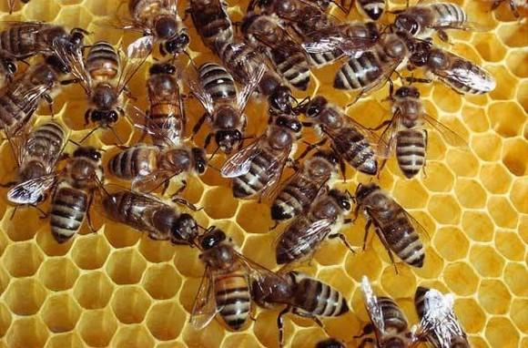 Likvidace včel v městě Praha